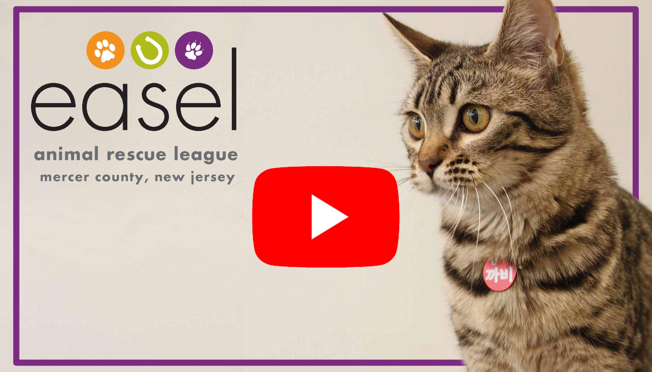 Video Link to Share Why to Donate and How EASEL Animal Rescue League Shelter & Pet Adoption Center Utilize Individual and Corporate Donations